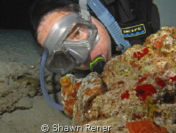 Diver finds a common reef Octopus on night dive... Cozume... by Shawn Rener 